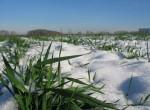 Влаги в начале весны на полях хватает
